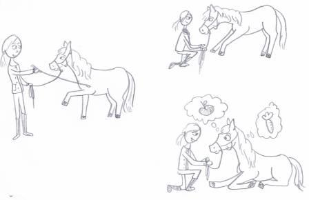 paard dingen leren met clicker