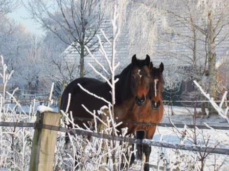 winter wol en hans